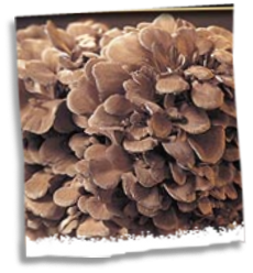 What is Maitake?